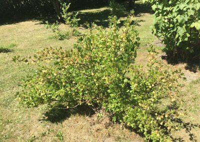 Grønmosegård (16)