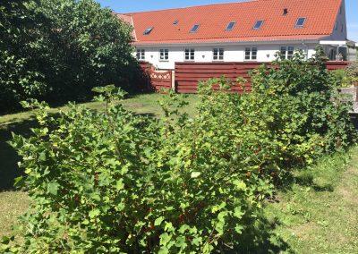 Grønmosegård (72)